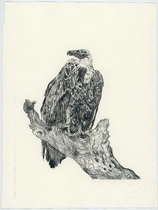 Helen_Vulture_Drypoint_LORES
