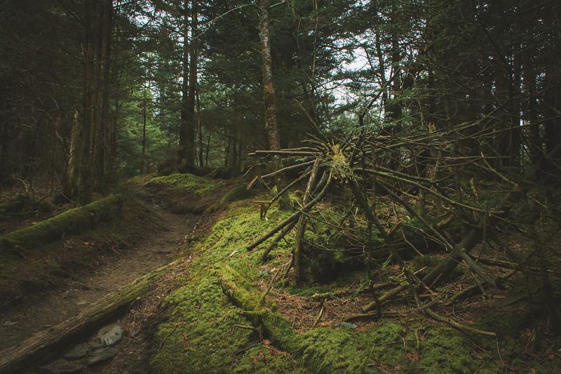 The Appalachian Wilderness