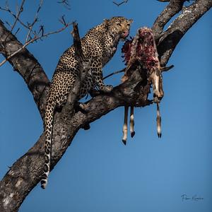 Sensitive Africa-46397