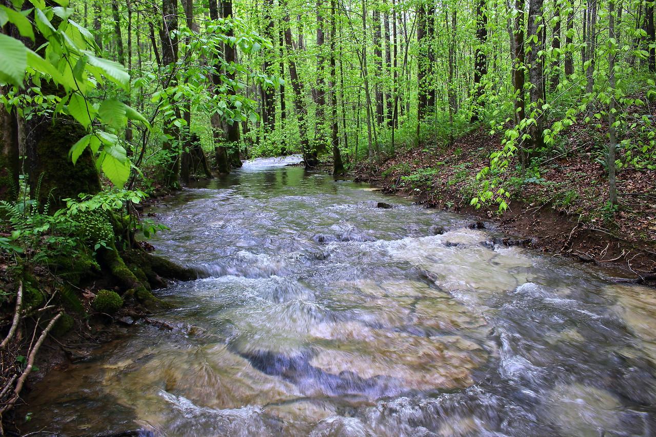 Lost Cane Creek bv 1