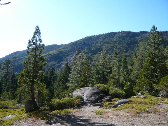 The Pauley Creek Trail becomes single track and continues south here.