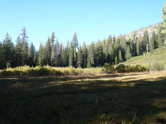 A meadow along Gold Valley trail.