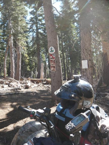 Grizzly at border between Plumas and Tahoe national forests, with Pacific Crest Trail signs (PCT crosses the motorized trail here).