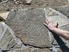PetroglyphsAtRoyalGorge_08