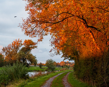Barrow towpath south of Bagenalstown