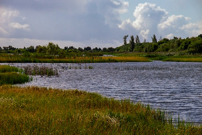 Turraun Wetlands, south of the Grand Canal