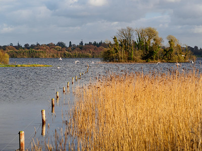 Lough Ennell shore at Ladestown