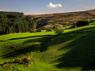 Evening shadows in Glencullen