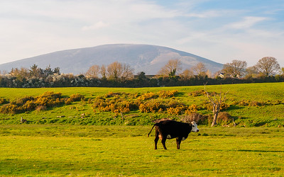 From the Suir towpath, with Slievenamon in the background