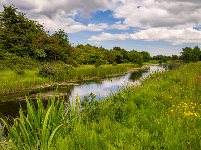 Royal Canal west of Enfield