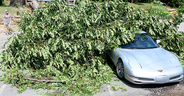 Kevin Harvison | Staff photo<br /> Danielle Frampton, duaghter of the Land Lord of 319 North First Street serveyes the damage from a tree falling due to high winds on a strom that passed through the area early Thursday morning to the renters Corvette.
