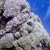 Fish near coral, Agincourt Reef, Great Barrier Reef, Queensland, Australia