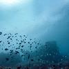 School of fish, Agincourt Reef, Great Barrier Reef, Queensland, Australia
