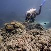 Scuba diver photographing underwater, Agincourt Reef, Great Barrier Reef, Queensland, Australia