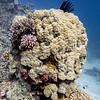 Coral reef, Agincourt Reef, Great Barrier Reef, Queensland, Australia