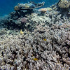 Fish among coral reef, Agincourt Reef, Great Barrier Reef, Queensland, Australia