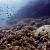 Fish and Coral underwater, Agincourt Reef, Great Barrier Reef, Queensland, Australia