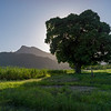 Scenic view of a tree in a field, Far North Queensland, Queensland, Australia