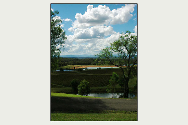 Audrey Wilkinson Vineyard<br /> Hunter Valley, NSW
