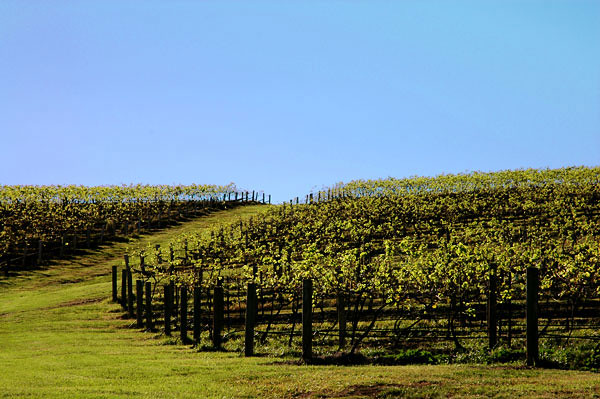 - wine country<br /> Hunter Valley, NSW