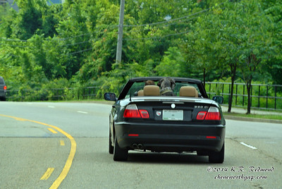 Dogs Love Convertibles