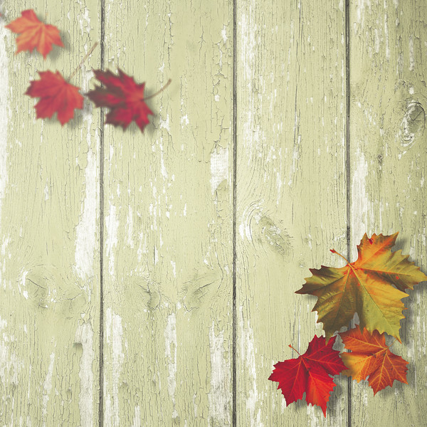 Simple autumnal backgrounds with maole leaf over wooden desk