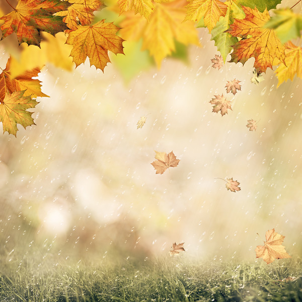 Abstract autumnal backgrounds with beauty bokeh and rain drops