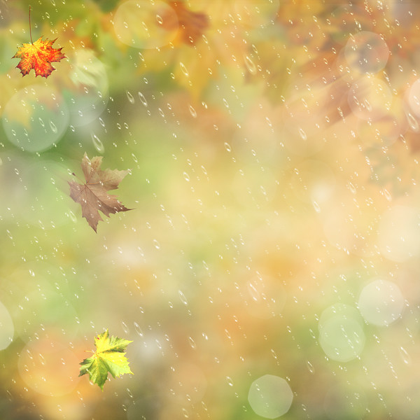 Autumnal rain in the forest, abstract environmental backgrounds