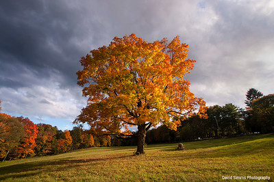 Sharon Tree