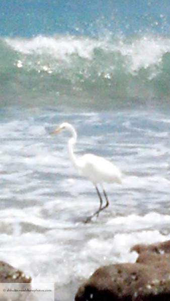 Heron in the Sea