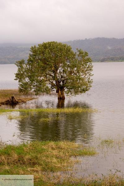 Tree in Lake Aranal, Cost Rica