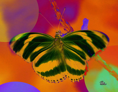 Item# 1017 Abstract Butterfly  11x14