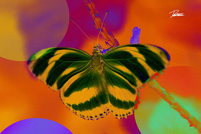 Item# 1017 -Abstract Butterfly- 12 x 18