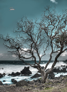 8X11 HAWAII TREE COLOR 01 copy