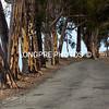 EUCALYPTUS tree lined Stage Road.