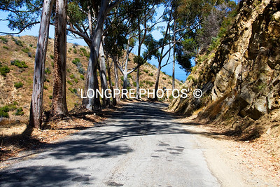 Tree lines STAGE ROAD.  going from Avalon up to top of hill and into interior.