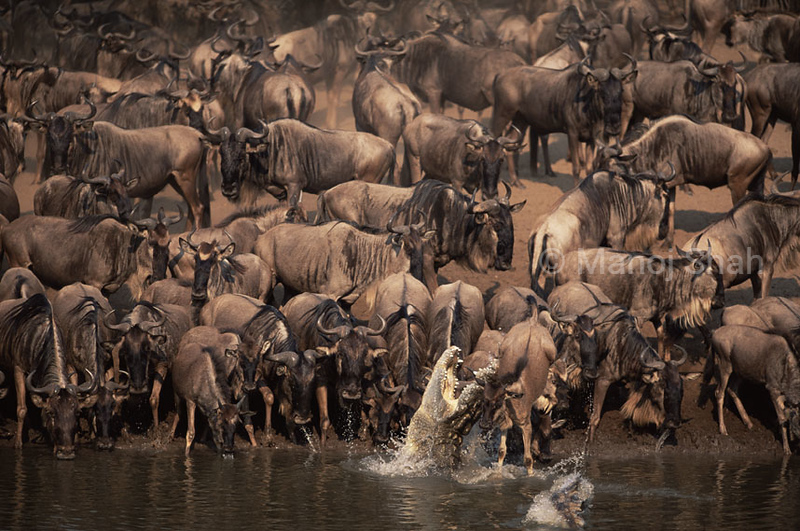 Prize winner in BBC WRY 2012 photographic contest