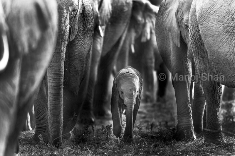 Shield Wall - as the African Wildlife category winner of the 2020 Wilderness Safaris Photographic Competition.