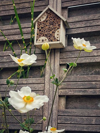 A Home for the Bees