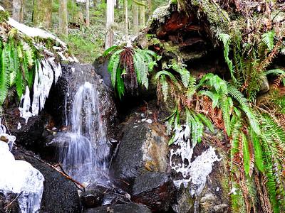 Mini Waterfall in the Frozen Rainforest