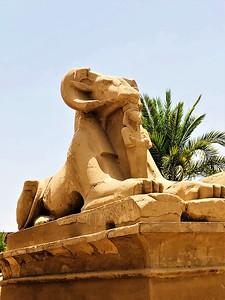 Goat-headed Sphinx