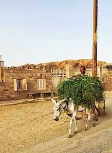 Sugar Cane Farmer