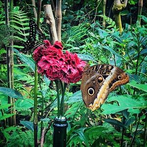 Loving the Nectar