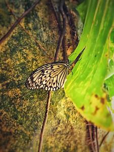 Alaris Schmetterlingspark