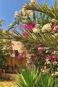 Flowers in Jordan