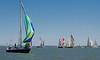 Wharf Rat USA 43655