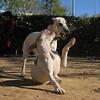 Cun (puppy), Jade (puppy)_010