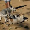 Cun (puppy), Jade (puppy)_004