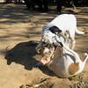 Cun (puppy), Jade (puppy)_005