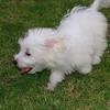 Elian puppy_003